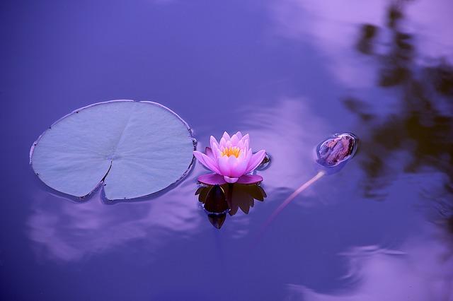 Lotusblume auf Wasser